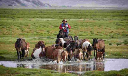 Image illustrant l'article randonnees-a-cheval-trois-chevauchees-fantastiques-a-vivre-en-mongolie de Clio Collège