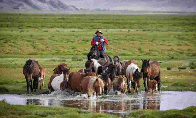 6e – Habiter un espace de faible occupation humaine: l'exemple de la Mongolie