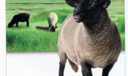 Image illustrant l'article Bretagne-7 de Clio Collège