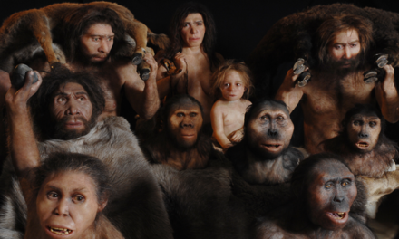 Image illustrant l'article australopitheques-neanderthal-homo-erectus-habilis-sapiens de Clio Collège